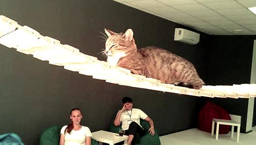 CatCaffe - кафе в Черкассах - Фото