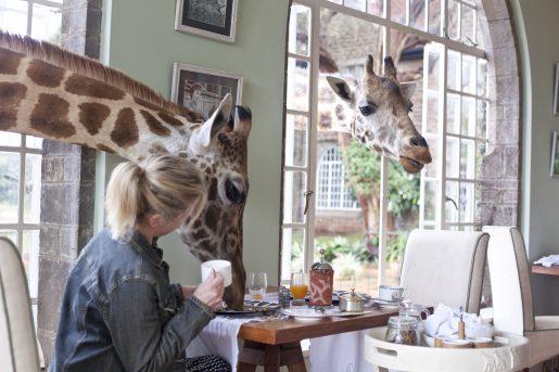 giraffe-manor-2