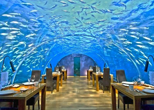 ithaa-under-sea-restaurant-with-fish