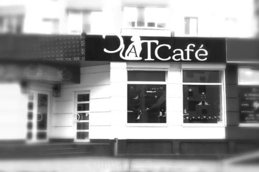 Cat Cafe в Черкассах