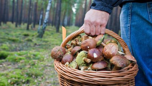 Сентябрь – сезон грибов: наслаждаемся вкусными грибными блюдами