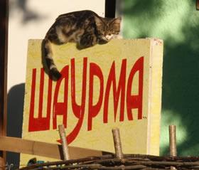 Чем кормят отдыхающих в Крыму