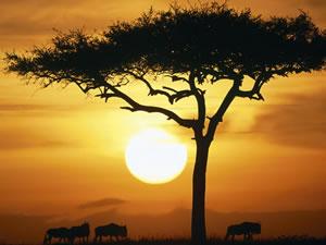 сафари в Африке
