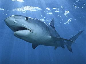 Нападение акул